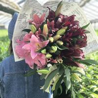 2021母の日スペシャル【Bunch of Lilies   Big 】ユリさんを10本束ねました!早期ご予約特典あり!