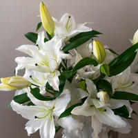 【Bunch of Lilies   M】ユリさん5本を束ねました!