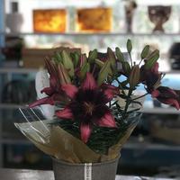 店舗引取専用【pot Lilies】 2020母の日早期ご予約割引商品 ラッピング込み価格