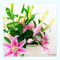 【Bunch of Lilies  L】ユリさんを7本束ねました!