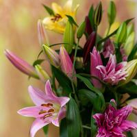 2021母の日【Bunch of Lilies L】ユリ7本を束ねました!早期ご予約特典あり