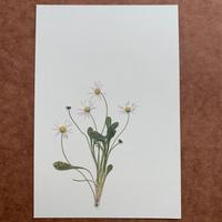 イン・ザ・モーニング(Post Card)