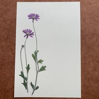 Fluid Phase(Post Card)