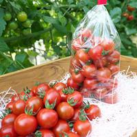 高糖度フルーツミニトマト500g
