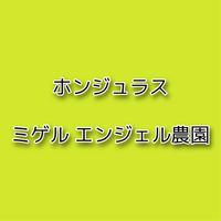ホンジュラス ミゲルエンジェル農園 250g【送料込み】