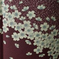 【袷】ダーククラレット色 満開の桜文 附下小紋