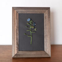 フレーム 藍染オオイヌノフグリ