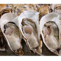 【愛知県初 生食用真牡蠣 】朋輩牡蠣(ほうばいがき 愛知県篠島産)15個入り