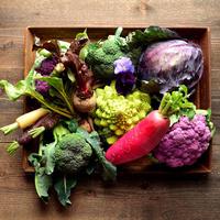 福岡産「Organic」おまかせ旬の野菜セット Mサイズ(クール便)