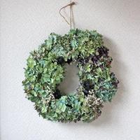 紫陽花 かみす草 シューフライ ドライフラワー リース  ozf-034