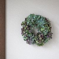 紫陽花ドライフラワー×ユーカリ グリーン系 リース  ozf-018