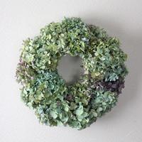 紫陽花 (アジサイ) ドライフラワー 大きめ直径40cm リース  ozf-058 グリーン系