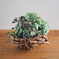 グリーンドライフワラーブーケ×山葡萄籠花器 (紫陽花,ユーカリ)