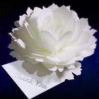 咲くようにひらく 花のサンキューカード〈ピオニー〉 forバースデー・ウェディング・アニバーサリー