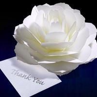 咲くようにひらく 花のサンキューカード〈ローズ〉 forバースデー・ウェディング・アニバーサリー