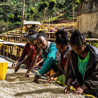【国名】エチオピア イルガチェフェ【地区】コチャレ ウォッシュ 150g 深煎り