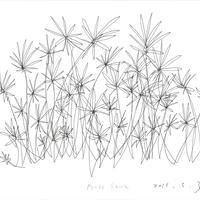 Drawing 「茎と花」
