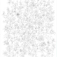 Drawing「春」