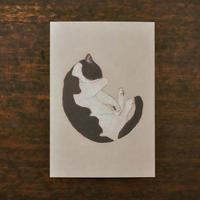 ささきめぐみ ポストカード 「猫まるまる」