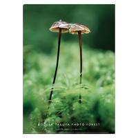 A4クリアファイル『森のいのち』