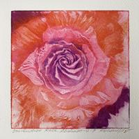 One hundred rose Abstract 4-7  Koharu  小春 2004年