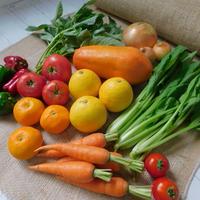 【定期便商品】栄養たっぷりスムージー8品目セット(宮崎産パパイヤとお野菜とくだもの)+おまけ1品目※定期便でおまけ野菜が1品目増えてお得‼︎