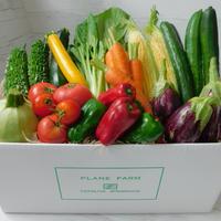 【定期便商品】旬のみやざきお野菜7品目セット+おまけ2品目     ※定期便で更におまけ野菜がもう1品目増えてお得‼︎