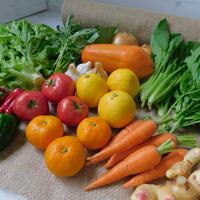 【定期便商品】栄養たっぷりスムージー12品目セット(宮崎産パパイヤとお野菜とくだもの)+おまけ1品目 ※定期便でおまけ野菜が1品目増えてお得‼︎