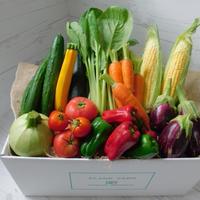 【お試し商品】旬のみやざきお野菜7品目セット+おまけ1品目