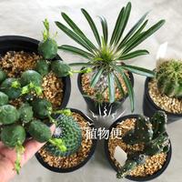今週の植物便