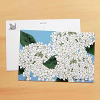 PC23 ポストカード 紫陽花