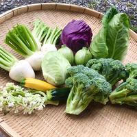 夏間近!毎日お野菜もりもりセット