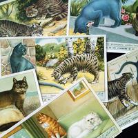1957年 LIEBIG◆世界の猫6種アンティーク・ビンテージカード