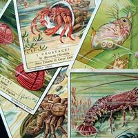 1938年 LIEBIG◆甲殻類6種アンティーク・ビンテージカード