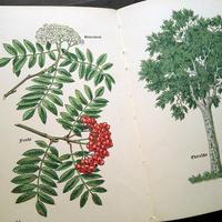 ◆ドイツ インゼル文庫Nr.316<小さな木の図鑑>◆Das kleine Baumbuch