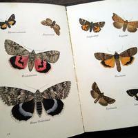 再入荷◆1936年ドイツ インゼル文庫Nr.226<小さな蛾の図鑑>◆Das kleine Buch der Nachtfalter