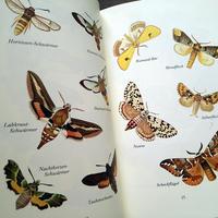 1985年ドイツ インゼル文庫Nr.226<小さな蛾の図鑑>◆Das kleine Buch der Nachtfalter