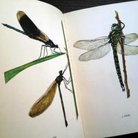 【再入荷】1961年ドイツ インゼル文庫Nr.725<小さな昆虫図鑑>◆Das kleine Insektenbuch