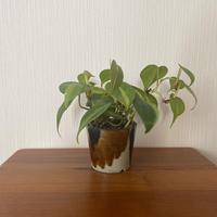 深貝工房 3寸植木鉢