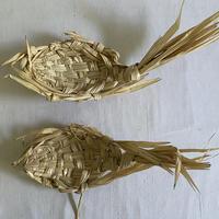 種水土花 フィッシュトレイM