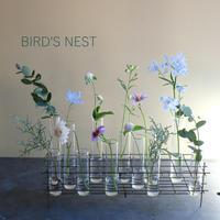 BIRD'S NEST  (L)