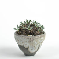 Othonna retrorsa × Tomoharu Nakagawa植木鉢