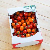 【9月18日10:00〜数量限定販売】きたいろトマト (フルーツトマト) 1kg