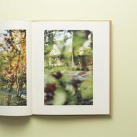 【 Between Maple and Chestnut 】Terri Weifenbach  コレクターズアイテム