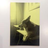 Dogod 2 By Akiko Watanabe / Thomas Marecki