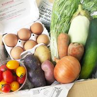 【定期便】EARTHの野菜BOX (2~3人家族用)