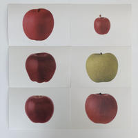 postalco postcard Apples