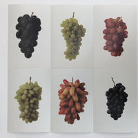 postalco postcard Grapes