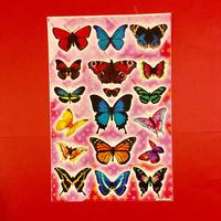 蝶々 シール 大 BUTTERFLY STICKER