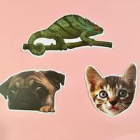 動物 シール 3枚セット ⑤ ANIMAL STICKER